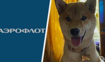 Собака получила жуткие травмы после полёта с «Аэрофлотом». Компания обвинила пса в неврастении