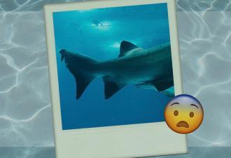 Дайвер сделал фото акулы, и людям страшно. Но не от вида хищника, а за него — он сражался с реальным Кракеном