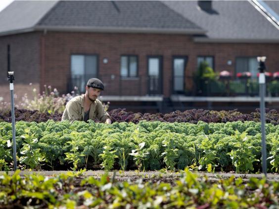Супермаркет развёл на крыше огород для помощи покупателям. Узнав страну на фото, люди заподозрили неладное