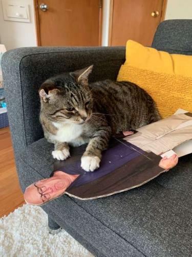 Кот нашёл себе новую любимую игрушку и удивил хозяйку. Зато Денни Де Вито был бы польщён вниманием пушистого
