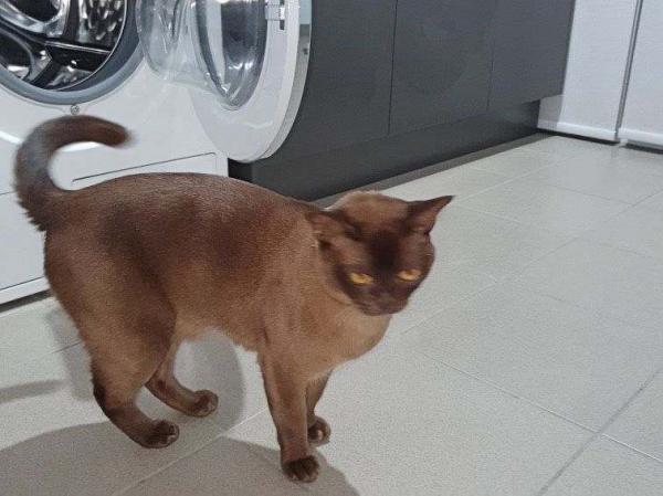 Хозяйка включила стиральную машину, не проверив, есть ли в ней кот. Следующие 12 минут были худшими в её жизни