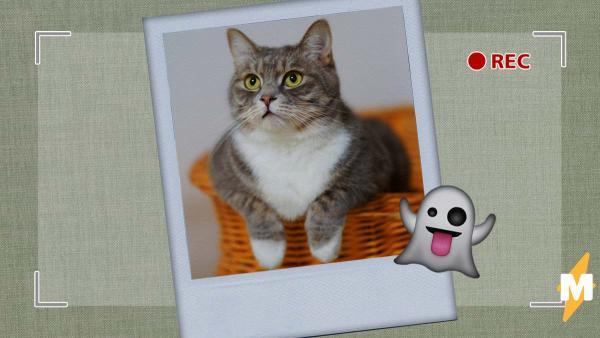Бабуля посмотрела запись с камер, а там призрак кота. Можно не верить в духов, но экзорциста вызвать захочется