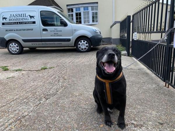Хозяин бросил пса с запиской. Письмо привело людей в ярость и печаль, но это и помогло найти собаке новый дом