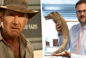 Рабочие продали старую кость под видом бивня мамонта, но остались в минусе. Мусор оказался реальным сокровищем