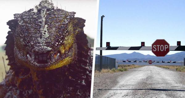"""Девушка гуляла в 100 километрах от """"Зоны 51"""" и поверила в рептилоидов. Ведь ей удалось заснять одного на видео"""