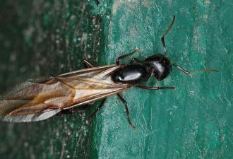 Крылатые муравьи атаковали Великобританию. Их рои настолько велики, что видны на метеорологической карте