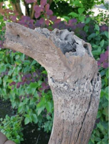 Строители нашли старую кость и сумели её продать. Но покупатель не прогадал, ведь это было настоящее сокровище