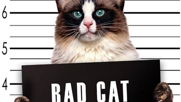 Кот зафанател по человеческой одежде, но такие затеи криминальны. Зато сердца людишек воруют на раз-два