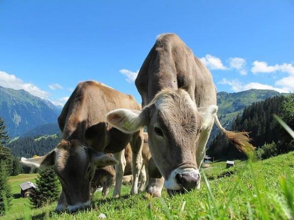 """""""Бургер Кинг"""" объявил о борьбе с коровьими газами и нет, не пошутил. Пригорело и у веганов, и у мясоедов"""