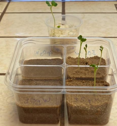 Учёный получил урожай обычной редиски и сделал прорыв для человечества. Важно не то, что он вырастил, а где