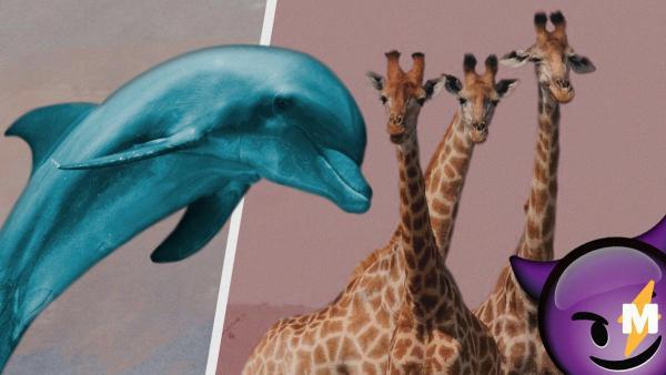 Вы не хотели знать эту правду о животных. Жирафов обвиняют в абьюзе, а дельфинов - в насилии, и это ещё не всё