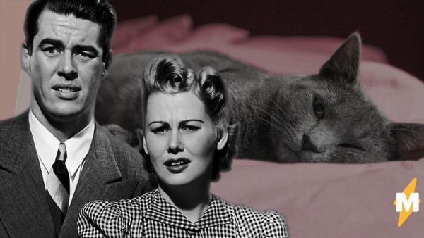 Муж не знал, как жена забеременела, а стоило присмотреться к коту. Ведь именно ему будущий малыш обязан жизнью