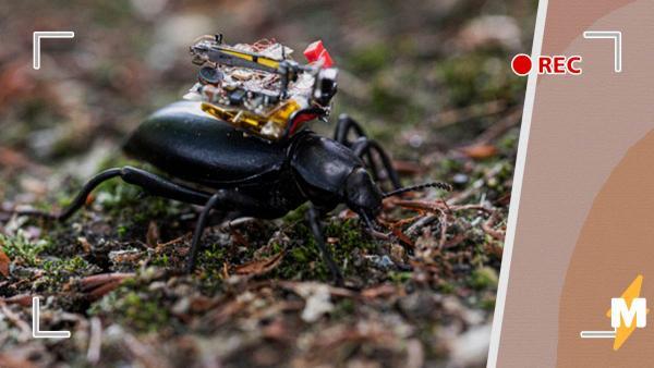 Учёные создали GoPro для жука, показав мир его глазами. Это видео стоит увидеть тем, кто боится насекомых