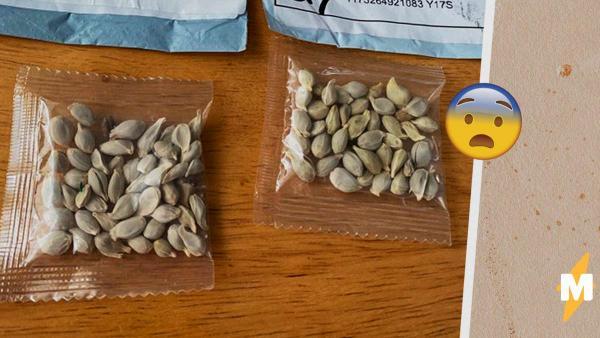 Почту США завалили загадочные семена из Китая, и чиновникам страшно. Они догадались, что это может быть