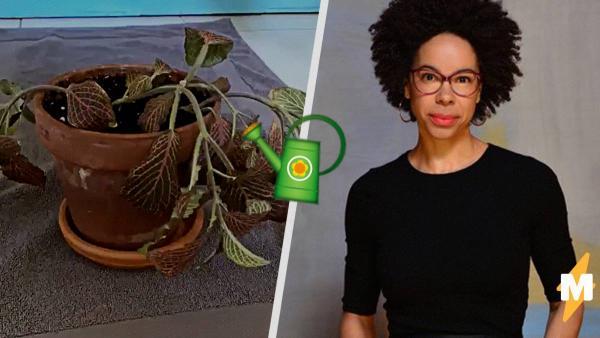 Вся жизнь в одном таймлапсе. Биолог перед камерой добавила воду в горшок с высохшим цветком - и случилось чудо