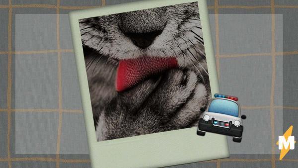 Мужчина публиковал фото питомца и поплатился за это свободы. Зверь красивый, но держать его дома - вне закона