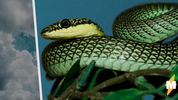 """Летающие змеи проползли в небе и озадачили учёных. Но поставленный над """"драконами"""" эксперимент удивил больше"""
