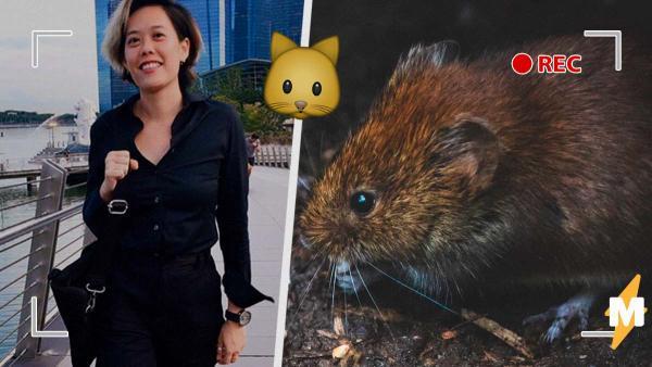 Кот хотел устроить охоту на крыс, но они справились и без него. И от жаркой битвы страшно стало даже хищнику