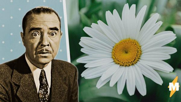 Цветки тоже умеют в мутацию. Люди увидели деформированные растения и поняли: Землю захватят вовсе не пришельцы