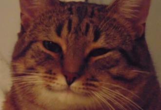 Прожорливый кот засунул голову в банку и пожалел. Впереди его ожидало незабываемое двухнедельное приключение