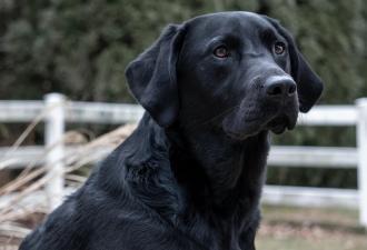 Хозяин бросил пса с запиской. Письмо тронуло и разозлило людей, но это и помогло найти собаке новый дом