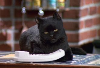 Любопытный кот сделал женщину миллионершей. Он не был породистым, а просто знал, где деньги лежат