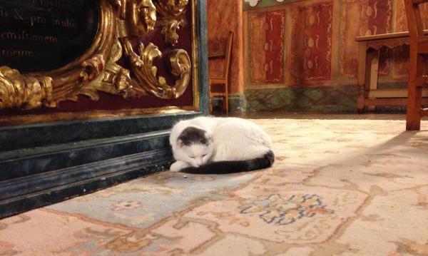 Видео храма собирают тысячи просмотров. Но секрет успеха не в молитвах, а в котах, которых умело эксплуатируют