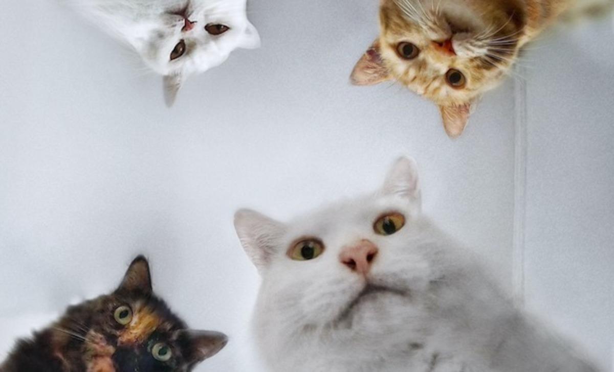Кошка бросила своих котят, посчитав их страшными. Вот только люди, нашедшие крох, так и не поняли - где подвох