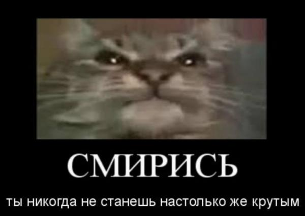 """Ролик с украинским котом выбрался из 2013 года в топы YouTube. Он всех """"мав"""" - и это можно понять неправильно"""