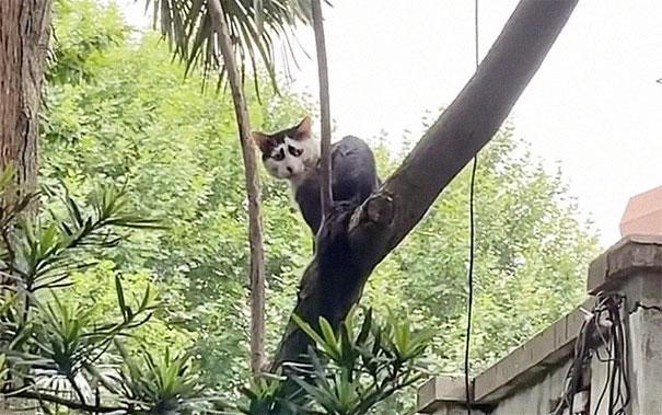 В Китае нашёлся кот, от взгляда на которого становится грустно. Но слёзы вызывает не его история, а внешность