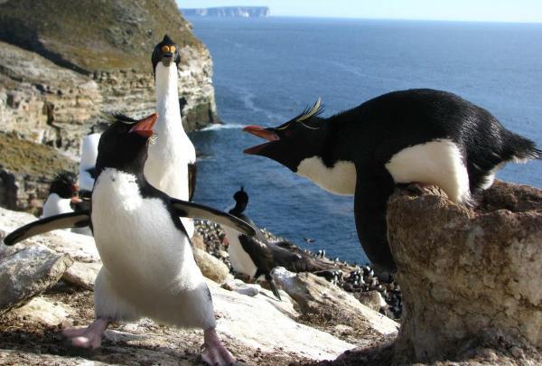 Фото из океанариума Киото доказало - местные пингвины живут в мыльной опере. И страсти там кипят, как на ТВ