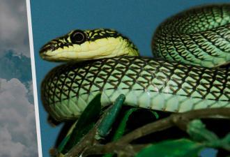 Летающие змеи проползли в небе и озадачили учёных. Но поставленный над