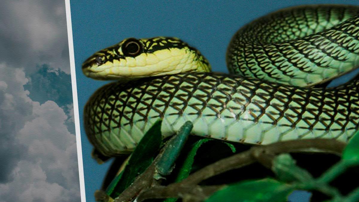 Летающие змеи проползли в небе и озадачили учёных. Но поставленный над «драконами» эксперимент удивил больше