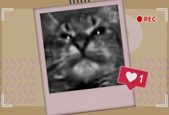 Ролик с украинским котом выбрался из 2013 года в топы YouTube. Он всех «мав» — и это можно понять неправильно