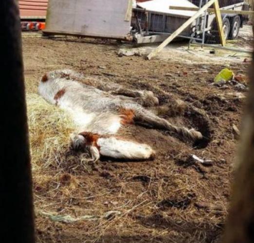 Лошадь кинули умирать, но она попала в добрые руки.