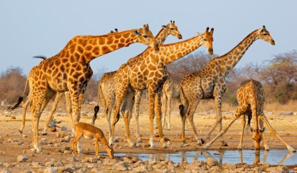 Вы не хотите знать правду о животных. Жирафов обвиняют в абьюзе, дельфинов - в изнасилованиях, и это не всё