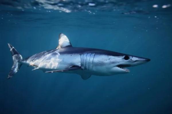 Эксперт по акулам развенчал мифы об этих хищниках. Но бояться их вы всё равно не перестанете, скорее наоборот