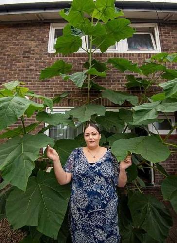 Домохозяйка срезала сорняк под окном, но это было ошибкой. В ответ растение захватило её дом и взялось за небо