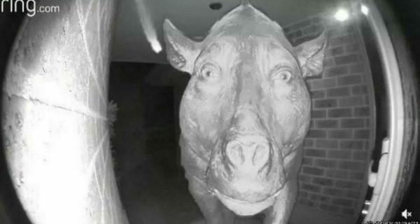 """Саня, открой. Древняя """"свинья"""" звонит в дверь и становится мемом - перед сном его лучше не смотреть"""