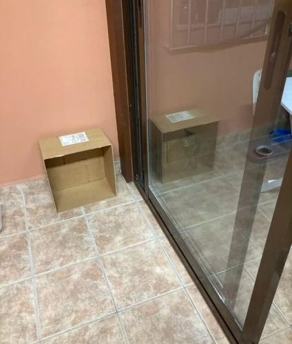 Кот, сидящий у двери, сводит с ума людей. Они не могут понять, почему он одновременно в коробке и нет