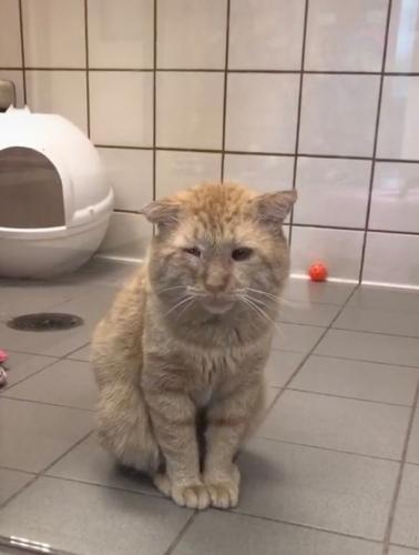 Девушка приютила кота с печальной мордой и сотворила чудо. Вид пушистого через год - счастье в чистом виде