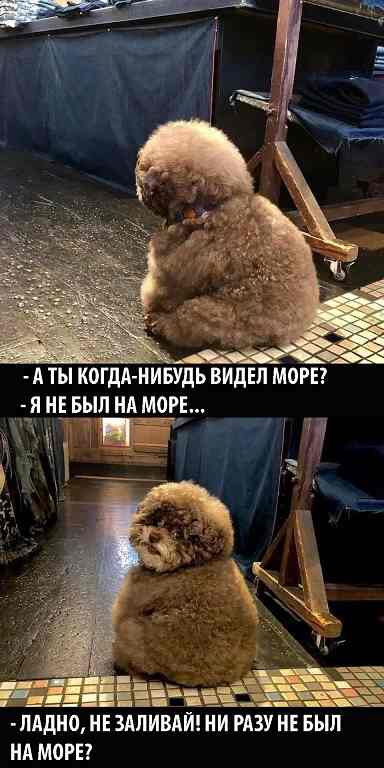 Пёс Черноуик