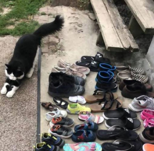 Кот решил провести лето за воровством и стал грозой района. Правда, его выбор добычи не одобрил бы Гена Букин