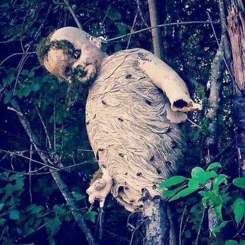 Американец рассказал о самом жутком осином гнезде, которое он видел. Из-за двух прожекторов оно напоминает исчадие ада