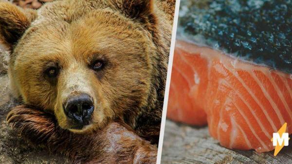 """Это не """"бахнув пельменей"""", а мишка с Аляски. У гризли стало слишком много рыбы, и смотрите куда это их привело"""