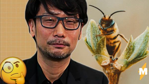Хидэо Кодзима и пчёлы - кроссовер, которого мы не ждали. Но, может, именно им японец обязан гениальностью?