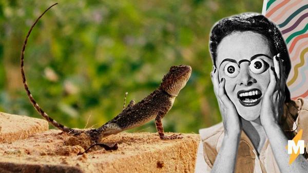 Бегун нашёл пол ящерицы и лишил людей сна. Судя по активности хвоста, это он отбросил рептилию, а не наоборот