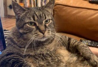 Кот ушёл в клептоманию и стал грозой района. Правда, выбор добычи пушистого не одобрил бы Гена Букин