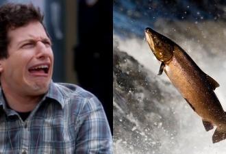 Люди увидели, в кого превращаются лососи во время нереста, и потеряли сон. Такого не покажут даже в