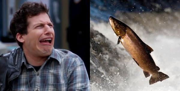 """Люди увидели, в кого превращаются лососи во время нереста, и потеряли сон. Такого не покажут даже в """"Челюстях"""""""